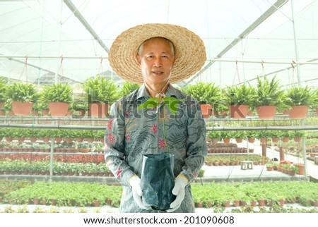 asian senior male farmer in workplace - stock photo