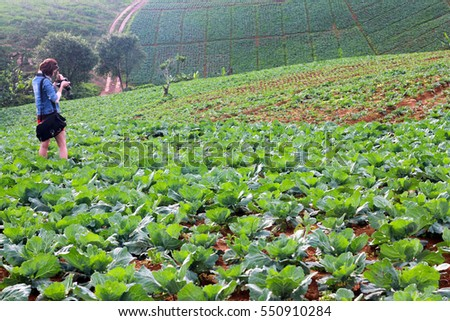 Asian woman carrying black camera bag and shooting photo of green cabbage farm. Nature Landscape, Person