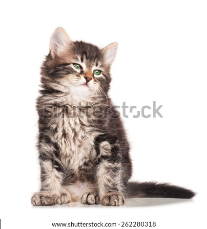 Asleep cute fluffy siberian kitten isolated on white background