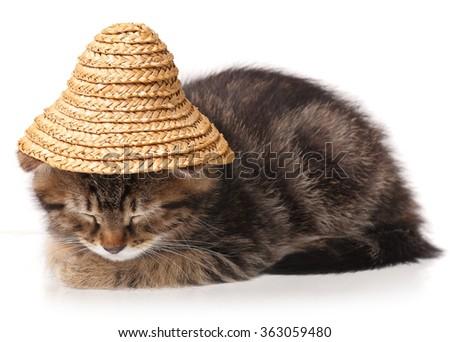 Asleep cute kitten isolated on white background - stock photo
