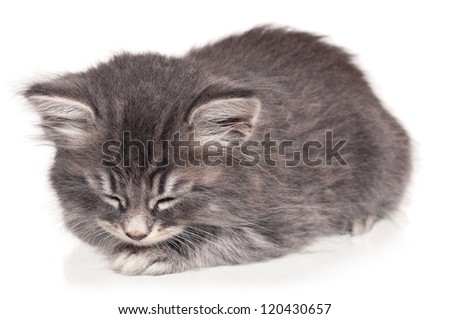 Asleep cute little kitten isolated on white background