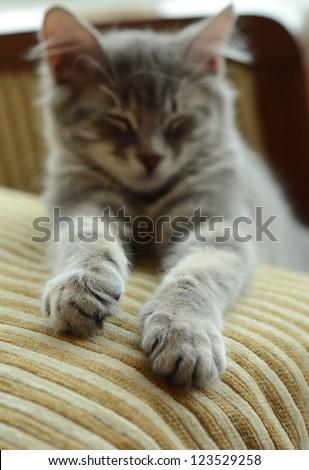 asleep kitten - stock photo