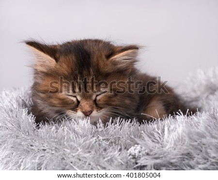 Asleep little siberian kitten on a warm knitted scarf over grey background - stock photo