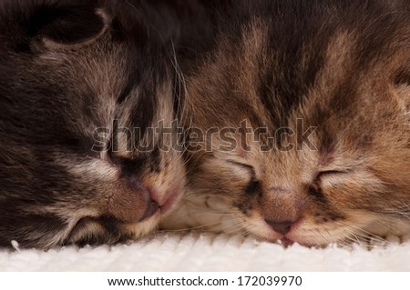 Asleep newborn kittens in a warm knitted white sweater close-up