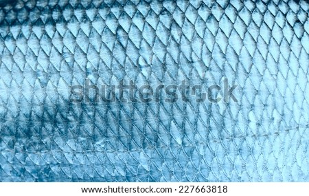 Asp fish scales, natural texture, toned - stock photo
