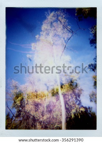 Aspen tree and blue sky double exposure made with instant camera. Lo-fi colorful blurry landscape stained photo.