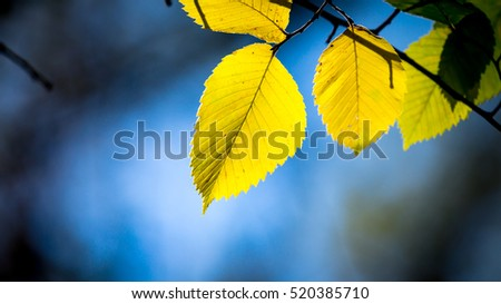 aspen tree twig on blue sky background - soft focus photo