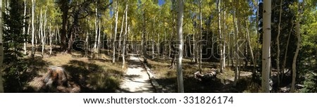Aspen trees in the autumn at Great Basin National Park in Nevada