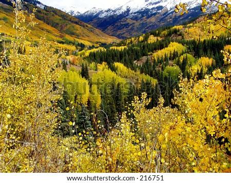 Aspens, Million Dollar Highway, Colorado - stock photo