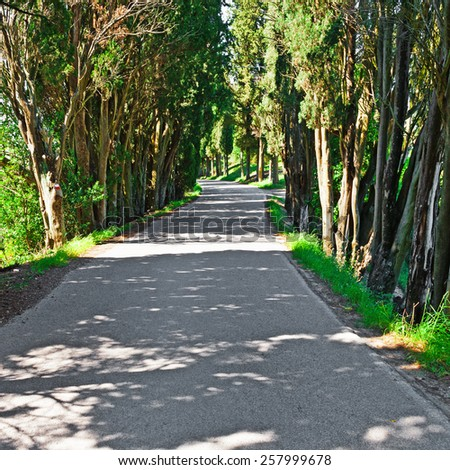 Asphalt Forest Road in Italy - stock photo