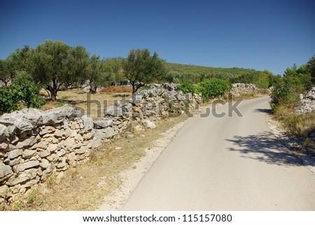 Asphalt road along the olive grove, Croatia Dalmatia Tribunj - stock photo