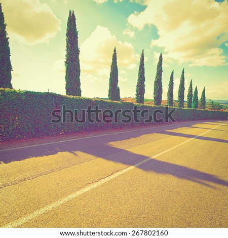 Asphalt Road and Cypresses at Sunset, Vintage Style Toned Picture  - stock photo
