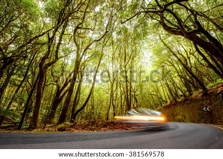 Asphalt road in evergreen forest with blurred car in Garajonay national park on La Gomera island.  - stock photo
