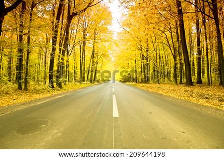 asphalt road in golden autumn forest. - stock photo