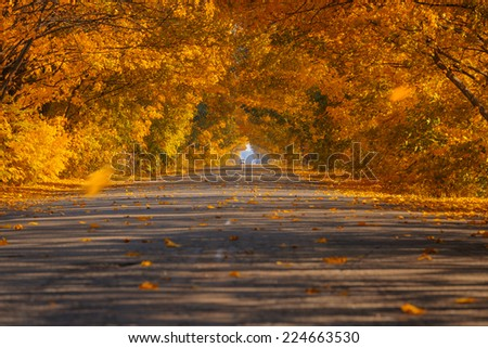 Asphalt road in the autumn alley. - stock photo