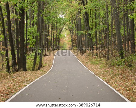 Asphalt road in the forest - stock photo