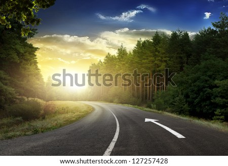 Asphalt road in the spring pine forest - stock photo