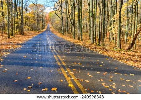 Asphalt road into autumn forest - Shenandoah National Park, Virginia - USA  - stock photo