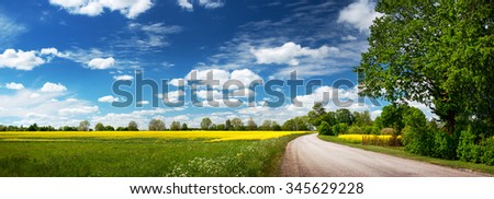 Asphalt road near a field with beautiful rapeseed flowers - stock photo