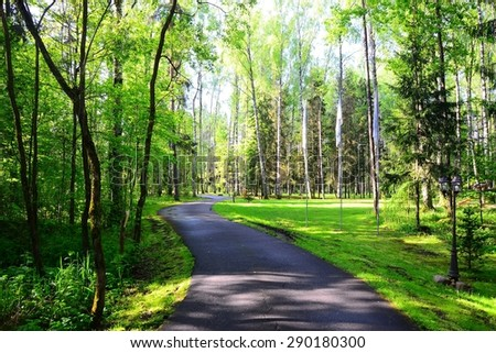 Asphalt road passes through the birch forest in morning light. Lithuania. - stock photo