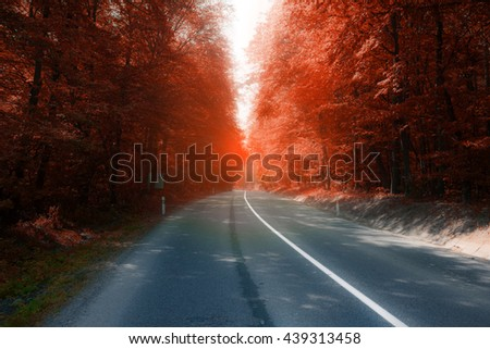 asphalt road through sunny fall forest - stock photo