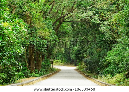 Asphalt road through the forest at day