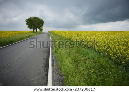 Asphalt road through the the fields with clouds above