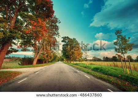 asphalt road with beautiful trees on the sides in autumn