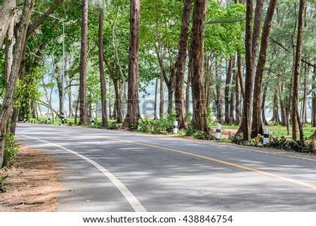 asphalt road with pine forest in Phuket,Thailand