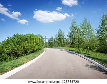 Asphalted road among birches at sunny day