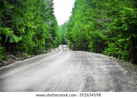 Asphalted road in the green fir tree forest - stock photo