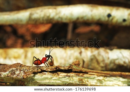 assassin bug attack a termite on the wood - stock photo