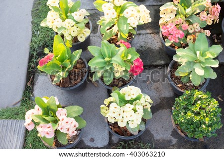 Assemblage of sprout or seedling of plant for decoration in the garden. - stock photo
