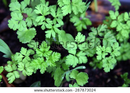 Assorted bright green bulb leaves - stock photo