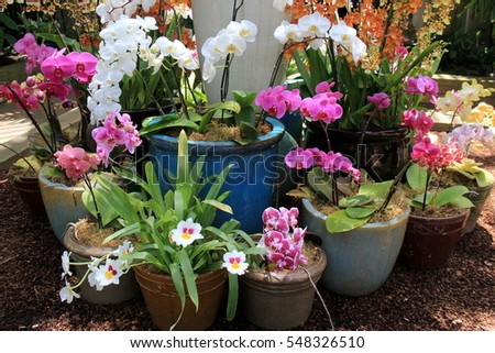 Assorted clay pots with gorgeous variety of exotic orchids