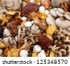 Assorted collection of fresh edible wild mushrooms harvested in autumn for use as ingredients in cooking - stock photo