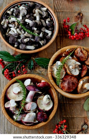 Assorted collection of fresh edible wild mushrooms harvested in autumn for use as ingredients in cooking, top view - stock photo