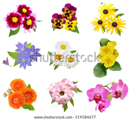 Assorted colorful flowers bunch isolated