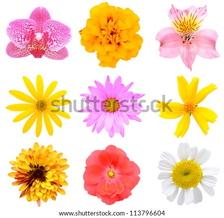 Assorted colorful flowers collection