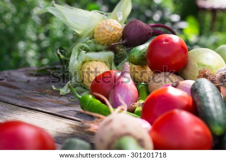 Assorted colorful vegetables and herbs on the old wooden background , harvest time