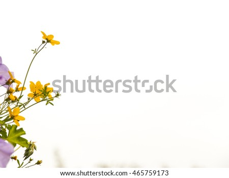Assorted flowers on white background from hanging basket