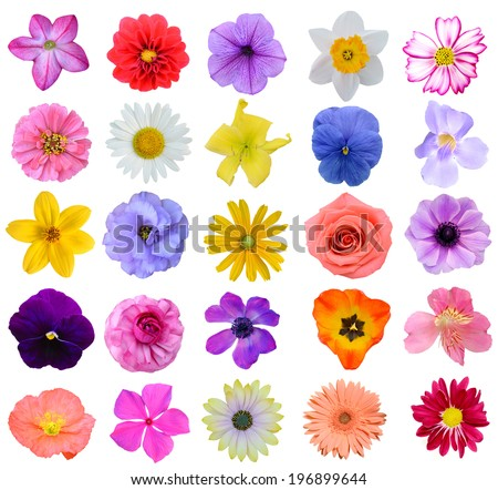 Assorted gardening seasonal blooms - stock photo