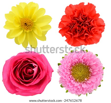 Assorted gift flower heads, isolated on white - stock photo