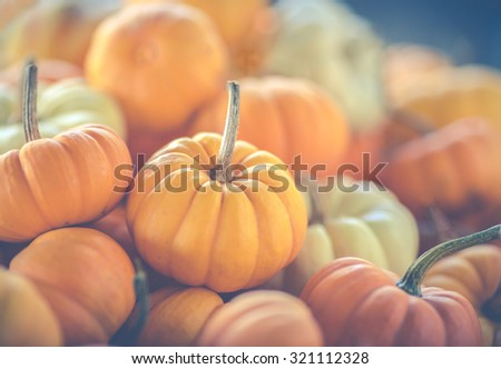 Assorted mini-pumpkins. A matte filter has been added  - stock photo