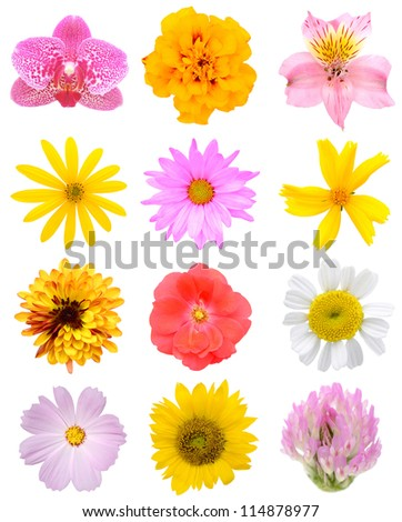 Assorted natural flowers in America