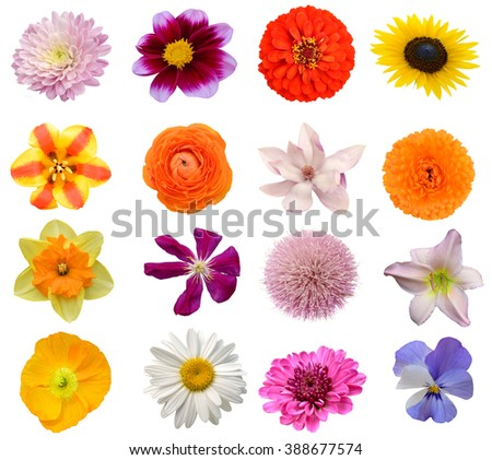 Assorted on America spring flowers - stock photo