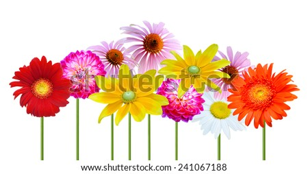 Assorted on colorful flowers, isolated white background  - stock photo