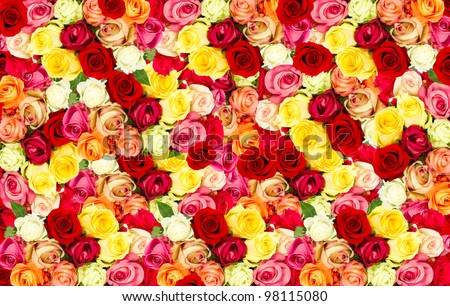 assorted roses. colorful flower background - stock photo