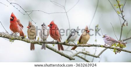 Assorted Songbird Flock - stock photo