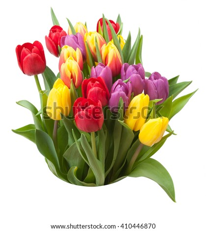 Assorted Tulips Bouquet. Isolated On White Background.
